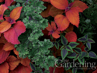 Fine Gardening Desktop Patterns