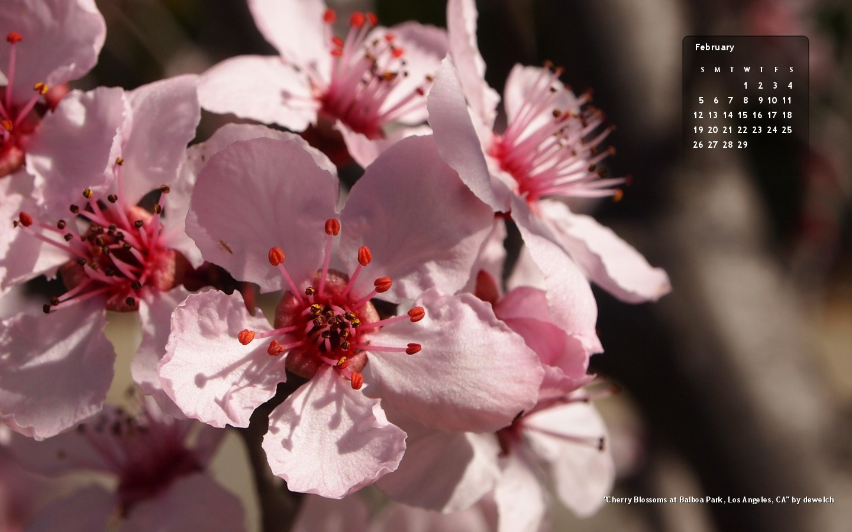 agn-feb2012-cherryblossoms.jpg