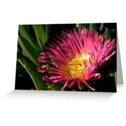 Ice plant cards