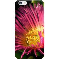 Ice plant iphone