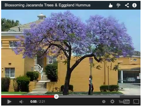 jacaranda-video