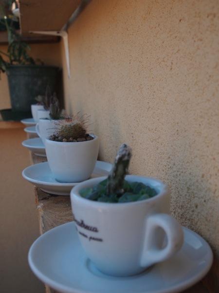 Cacti in Espresso cups 2
