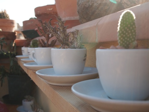 Cacti in Espresso Cups 1