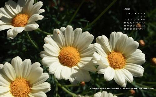 Daisy wallpaper calendar