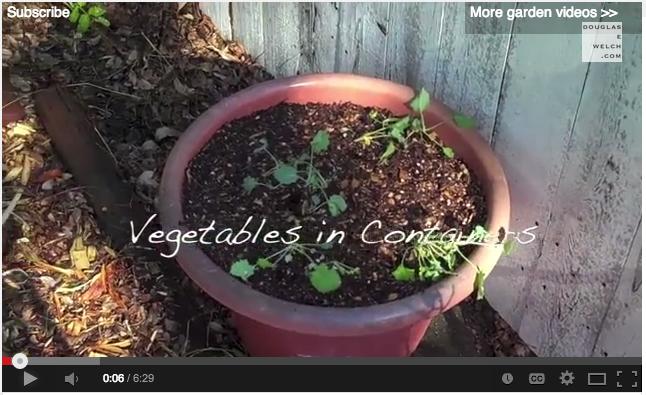 Container Garden Update 1