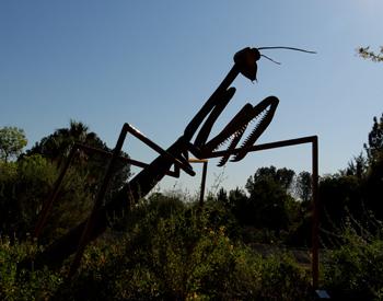 Bigbugs2 350