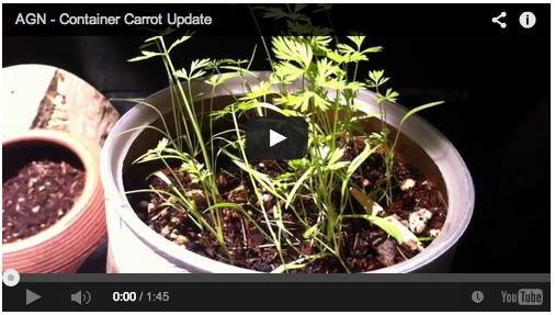 carrot-garden-update