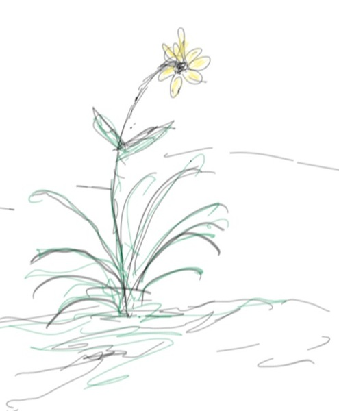 Cute Flower Sketches | www.imgkid.com - The Image Kid Has It!
