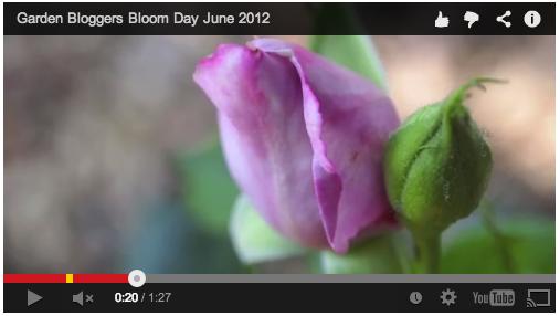 garden-bloggers-bloom-2012