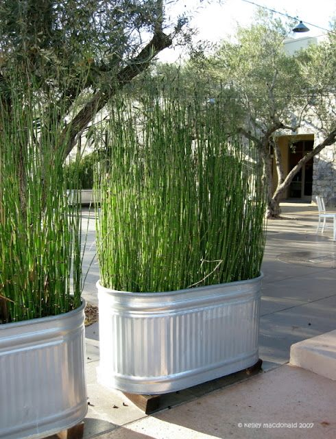 tall-galvanized-planters