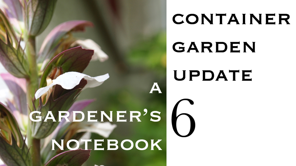Container Garden Update 6 from A Gardener's Notebook