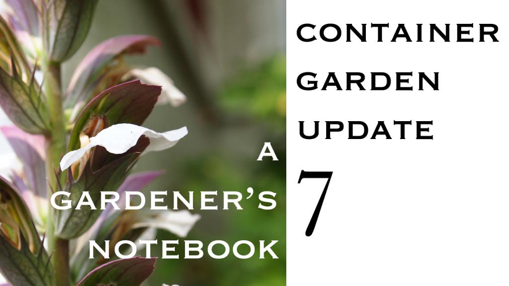 Container  Garden Update 007