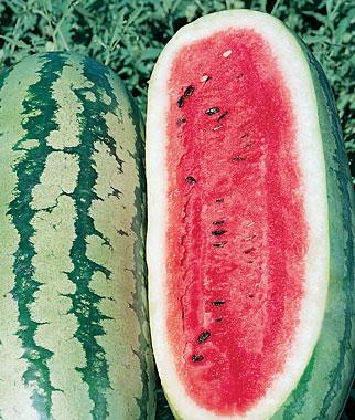 Rattlesnake melon