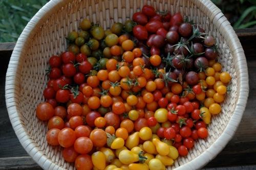 Tomatomania seminar
