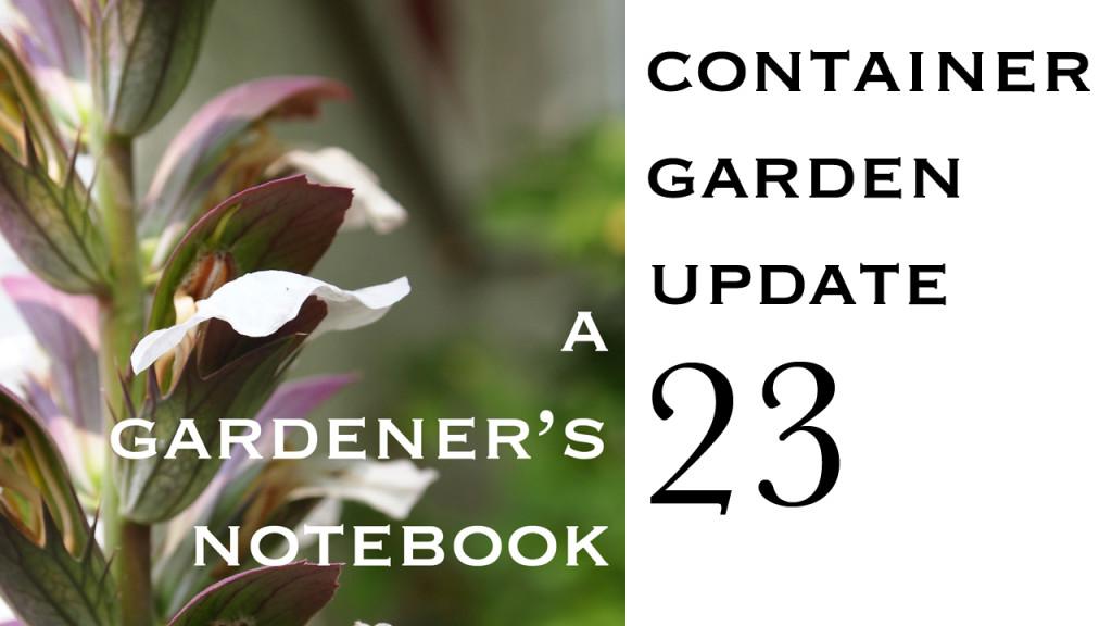 Container Garden Update 23