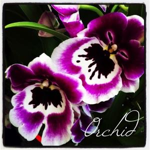 Garden alphabet orchid