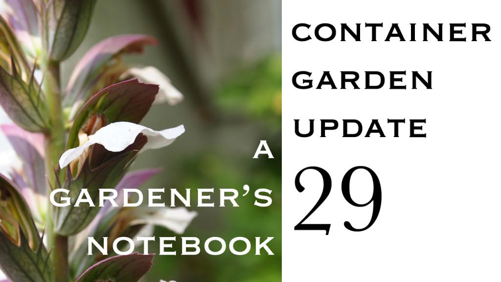 Container Garden Update 29