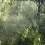 Cloudgrass