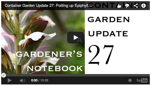container-garden-update
