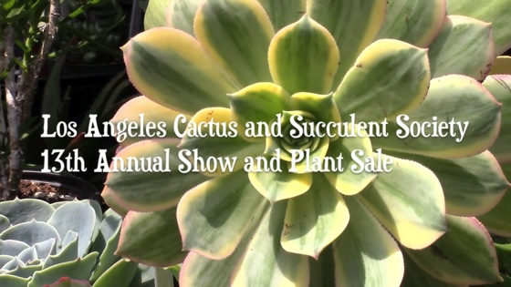 La cactus thumbnail