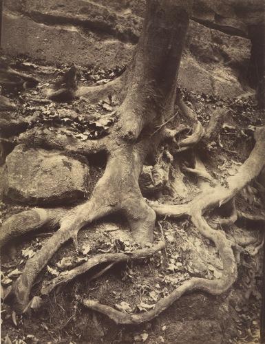 Atget roots