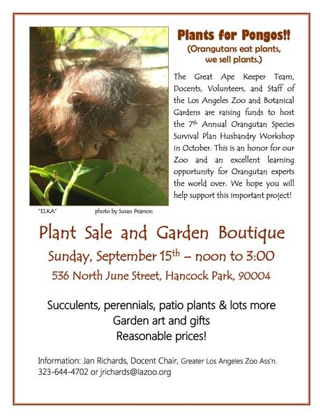 Elka plant sale