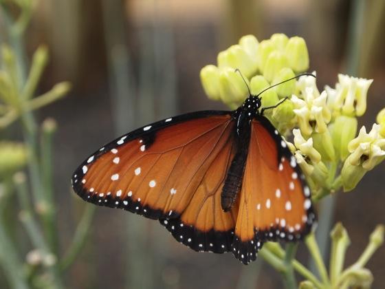 Sunnylands butterfly