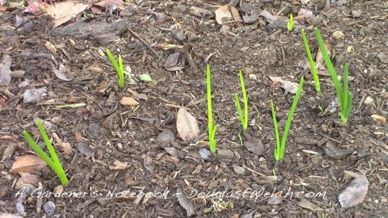 Agn 20140109 short onions thumb