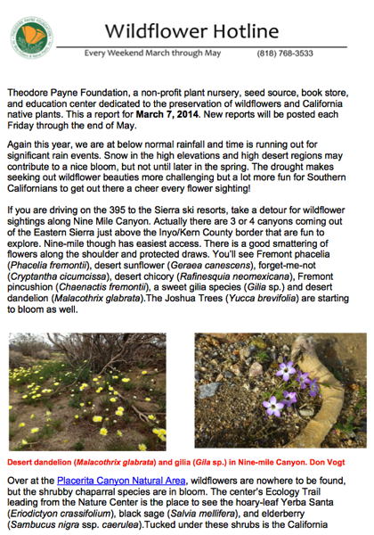 Wildflower report