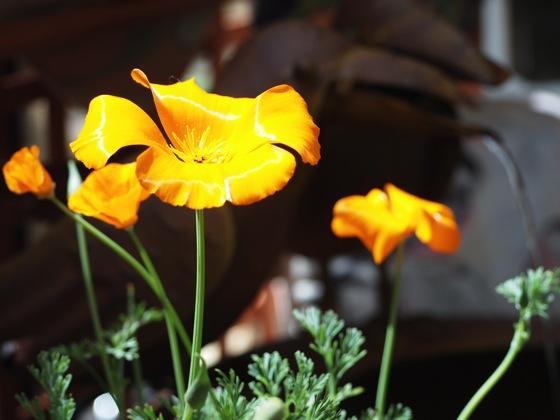 Southern Californa Spring Garden Show 2014