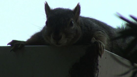 Squirrel resting thumb