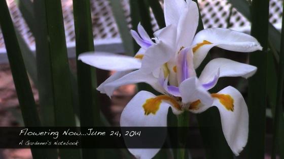 Flowering Now for June 24, 2014