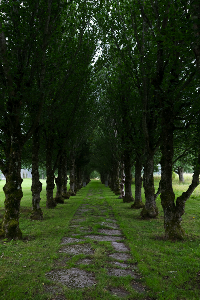 Haringes lott path of trees