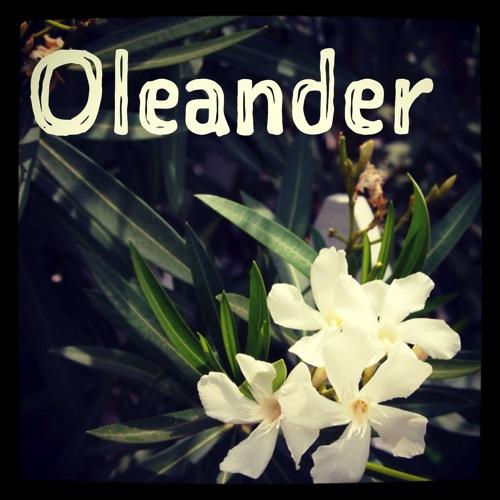 Garden Alphabet: Oleander via Instagram