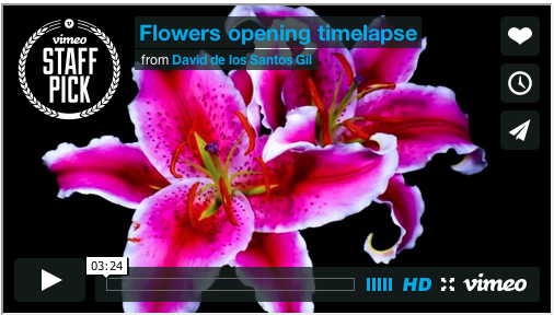 Pistil-Whipped: This Video Makes Flowers Look Like The Most Magical Organisms On Earth via Fast Company