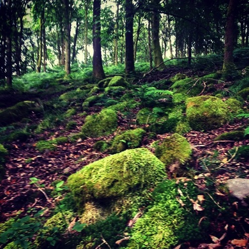 Moss woods #ForestOfDean via Simon Robinson on Flickr