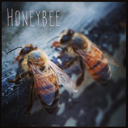 Garden Alphabet: Honey bee
