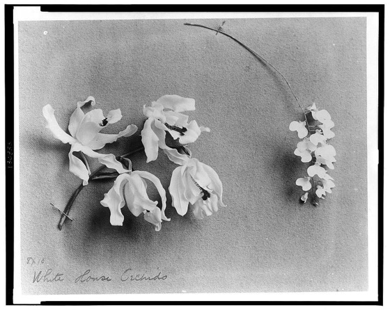 Old Time Farm Crime: The Cutthroat World of Victorian Orchid Hunters via Modern Farmer