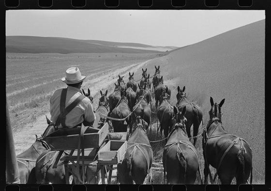 13 Vintage Photos of Combines via Modern Farmer