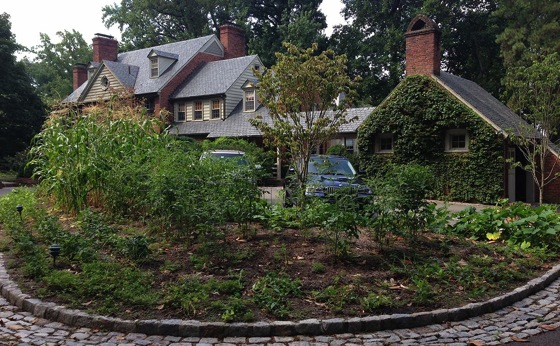 4 Reasons to Plant a Vegetable Garden in the Front Yard via Modern Farmer