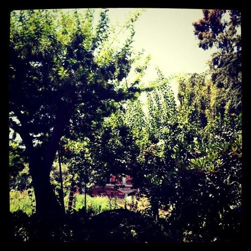 In the Sicilian garden 2011