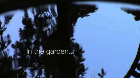 In the garden…August 13, 2014: Colors, textures and movements of the garden