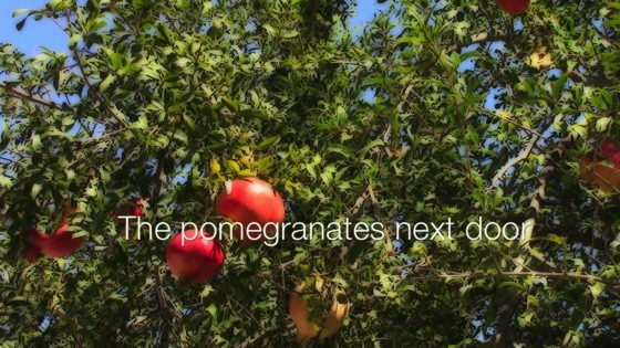 Video: The pomegranates next door...from A Gardener's Notebook