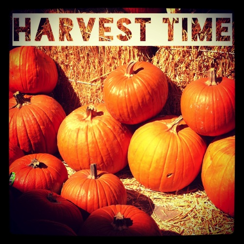 Photo: Harvest Time via #instagram #fall #halloween