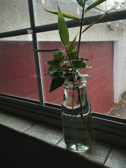 Photo: More cuttings on the window sill