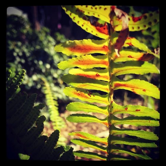 Photo: Fern with spores via #instgram