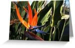 Bird paradise cards