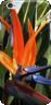 Bird paradise iphone