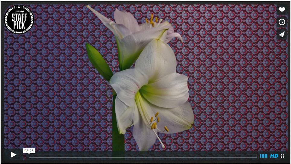 flower-timelapse