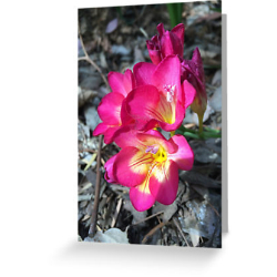 freesia-card-sq